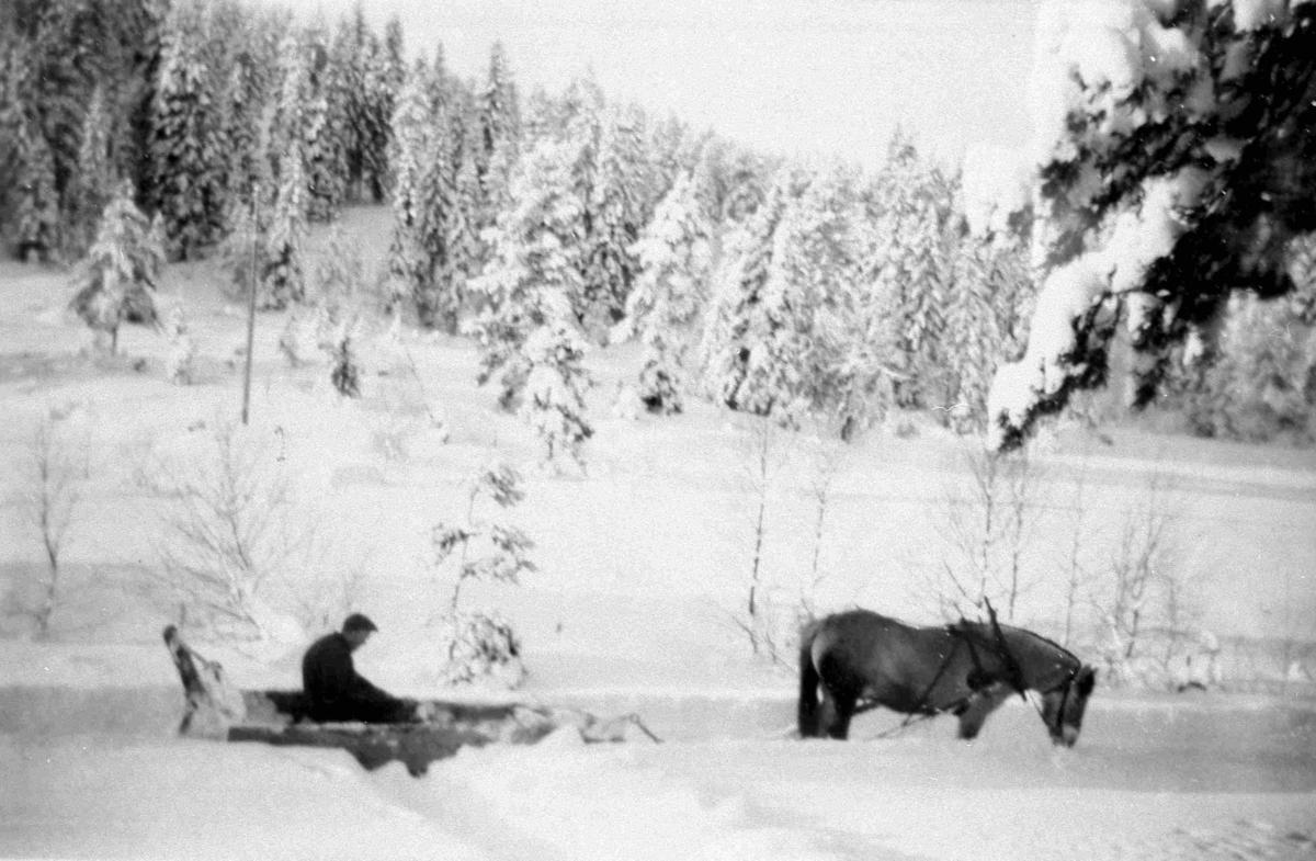 Bilder fra Birkenes kommune Olav Espestøl ca 1950