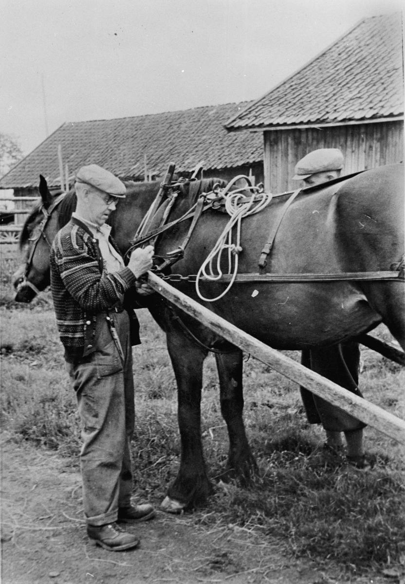 Dønnum nordre, under krigen. Fra v. Paul Frank (fdt 1880) og bak hesten Karl Frank (fdt 1886).