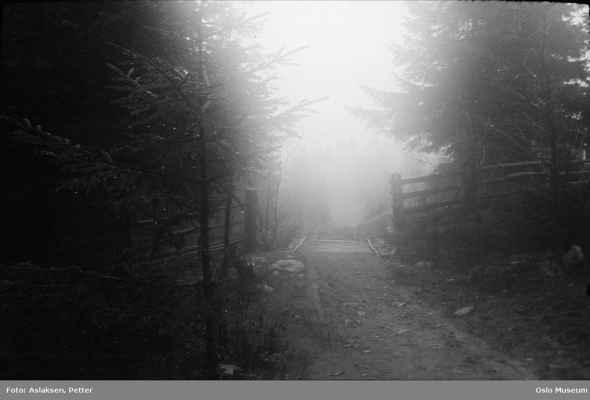 skogsvei, gjerde, bro, skog, idyll, høststemning