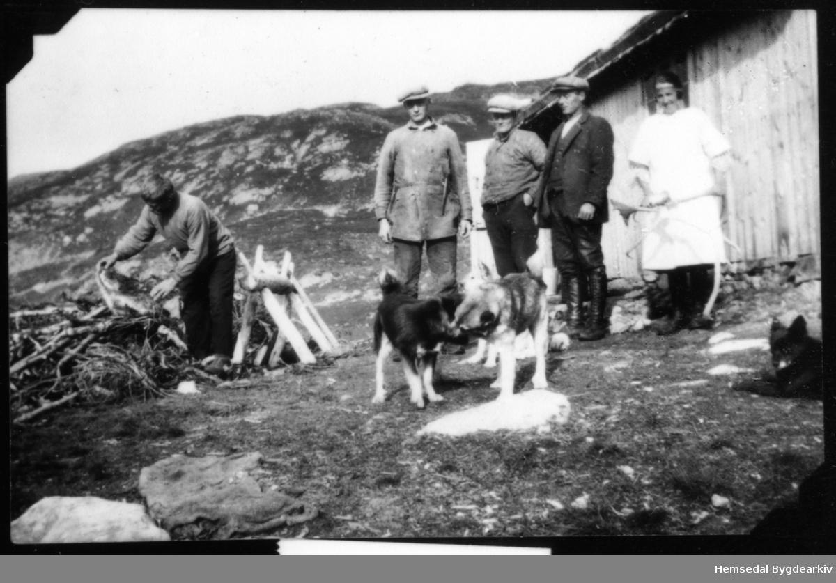 Reinsgjetarar, rimelegvis under slaktinga, her er nemleg kokka på plass. Biletet er teke i Vabuleino i Hemsedal. Odin Danneborg ved sagakrakken, vidare Ola J. Grøthe (Gunvaldgard), Knut J. Grøthe (Bygdheim) og Jon Brekke frå Valdres. Birgit Vente er kokka. Birgit var kokke under reinslaktinga og vart gift med Jon Brekke.