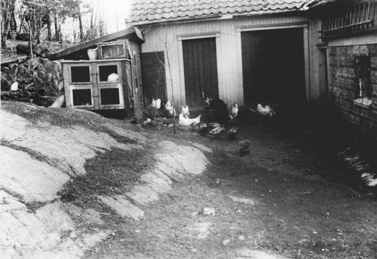 Matauke under krigen.