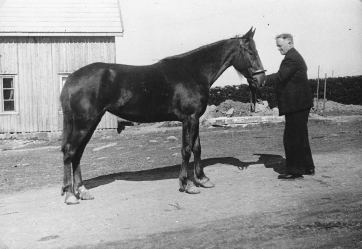 Mann med hest.