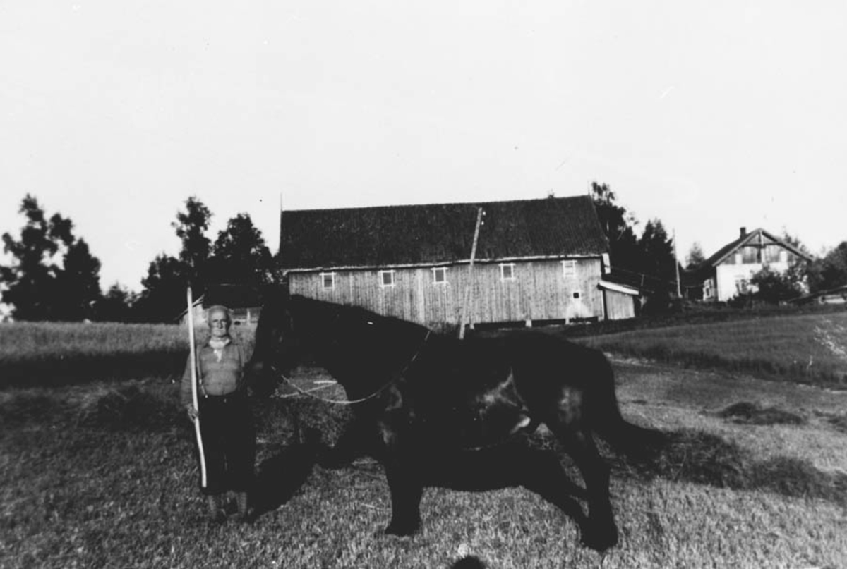 Thorvald Tyskerud og hesten ute på jordet nedenfor låven.